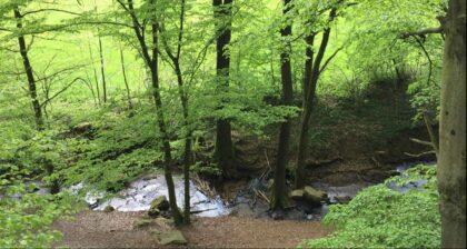 Natur im Odenwald