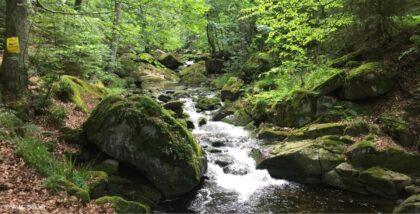 Warum das Wandern glücklich machen kann – Ein Impuls meiner Wanderfreundin Sabine Holicki