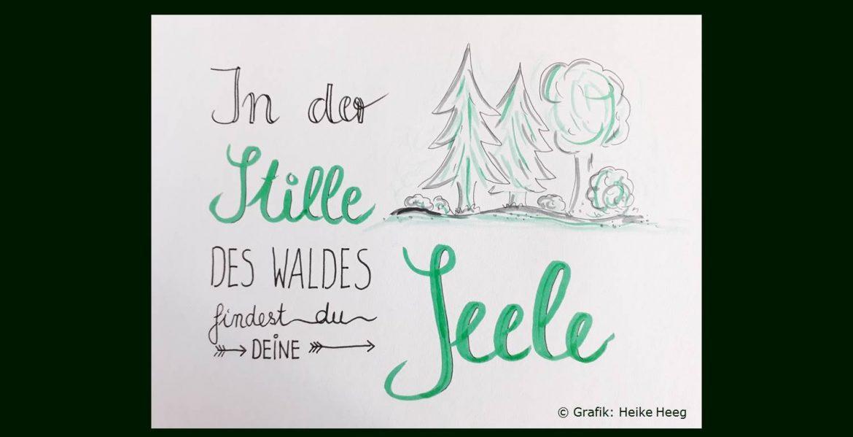 In der Stille des Waldes findest du deine Seele - Blogbild Changemanagement.biz zu Ruper Sheldrake