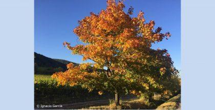 Pfälzer Weinstraße - Wertschätzung beim Wandern