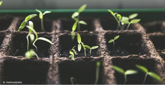 Sämlinge für gutes Wachstum