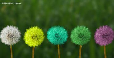 Pusteblumen als Bild für Achtsamkeit und Transformation