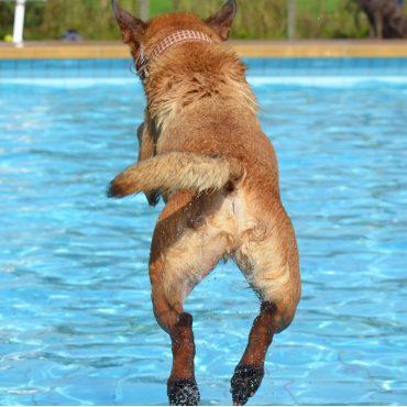 Chagen-Fasten: Hund springt in Pool